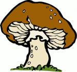big_mushroom